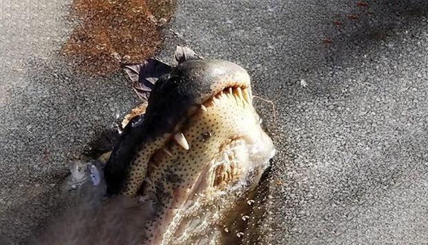 Loài cá sấu tồn tại trên Trái Đất cả triệu năm rồi, phương pháp cho phép chúng sống dai như vậy là đây - Ảnh 2.
