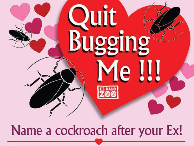 Quà Valentine: Sở thú Mỹ mời bạn đặt tên người yêu cũ cho gián rồi xem nó bị chồn đất ăn thịt - Ảnh 1.