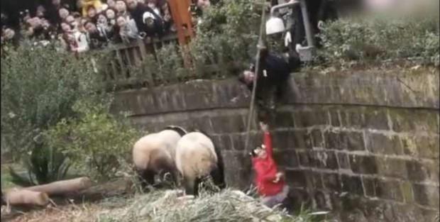 Bé gái may mắn thoát khỏi móng vuốt gấu trúc khi sa chân vào hang ổ của chúng - Ảnh 1.