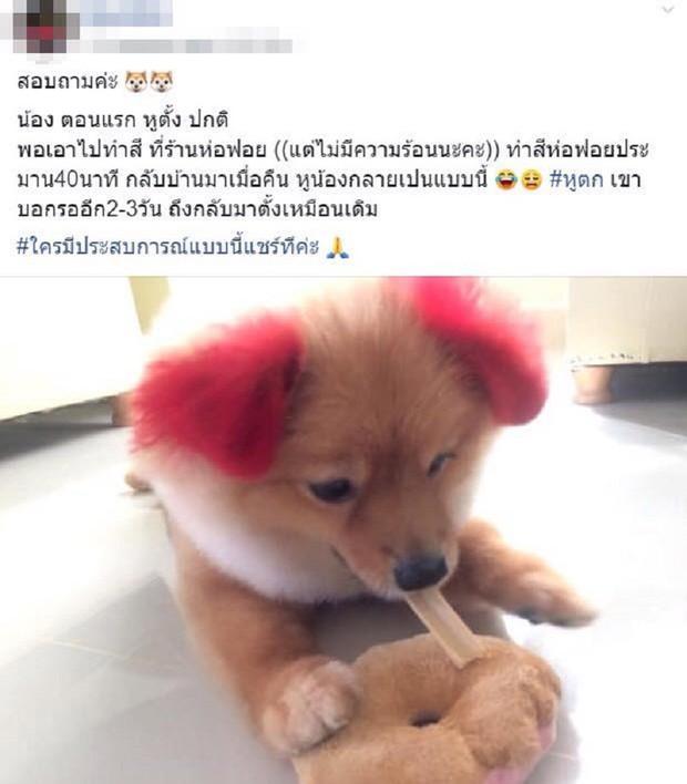 Ăn theo trào lưu nhuộm tai chó màu hồng, cô chủ Thái Lan bị chỉ trích vì khiến thú cưng dị ứng đến rụng cả tai - Ảnh 4.
