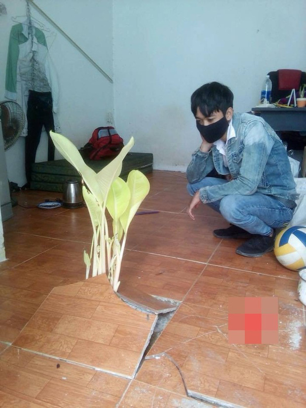 Chỉ 10 ngày nghỉ Tết, sinh viên phát hoảng khi thấy cây cối sinh sôi nẩy nở khắp phòng trọ - Ảnh 2.