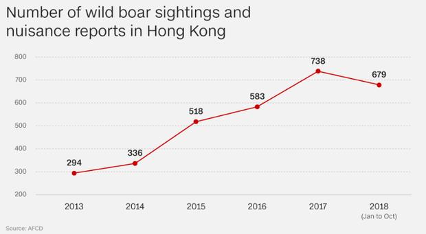 Lợn rừng xuất hiện từng đàn, chạy điên cuồng trong khu dân cư, sân bay và trung tâm thương mại ở Hồng Kông - Ảnh 2.