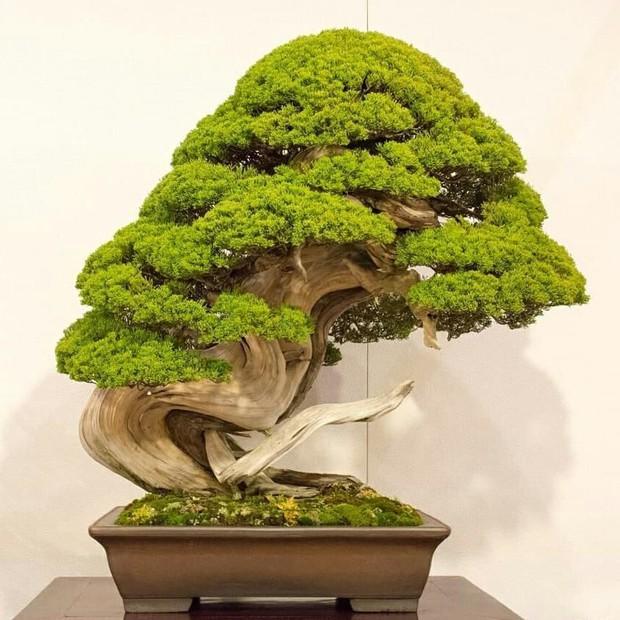 Trộm lẻn vào vườn bonsai 5.000 ha, trộm 7 cây quý gần 3 tỷ đồng - Ảnh 1.