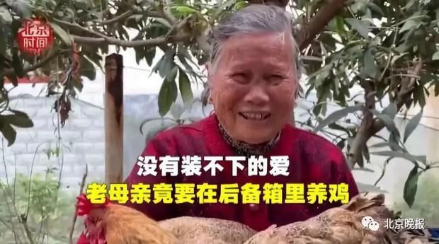 Trung Quốc: Chết cười hình ảnh lợn và gà chen chúc nhau trên cốp xe lên thành phố sau nghỉ Tết - Ảnh 7.