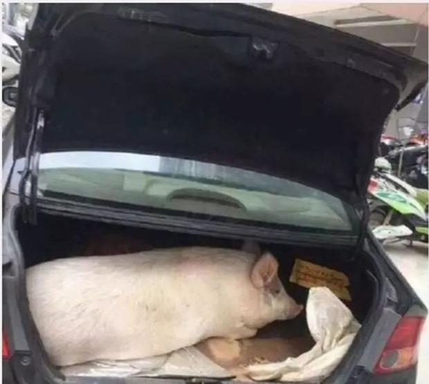 Trung Quốc: Chết cười hình ảnh lợn và gà chen chúc nhau trên cốp xe lên thành phố sau nghỉ Tết - Ảnh 1.