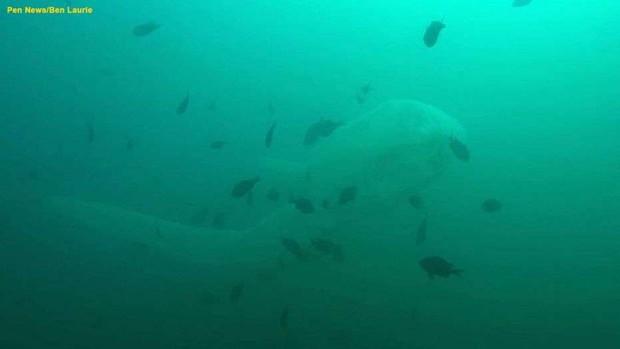 Kinh hãi khoảnh khắc đối mặt với quái vật biển dài 10 mét - Ảnh 1.