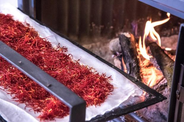 Saffron không tự nhiên mà đắt, cách người ta sản xuất ra nó cầu kì đến thế này cơ mà - Ảnh 3.