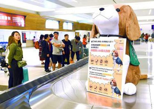 Đài Loan kiểm tra tất cả khách bay từ Việt Nam để ngăn ngừa virus dịch tả lợn, mức phạt có thể lên đến 150 triệu đồng - Ảnh 1.