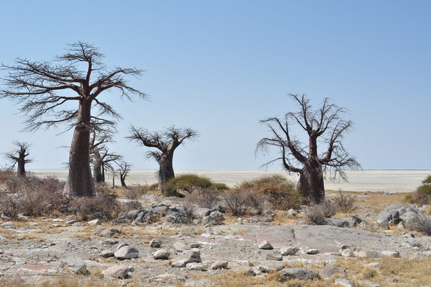 Choáng với sự sống đẹp huy hoàng tại chảo muối được mệnh danh là Vùng đất chết - Ảnh 7.