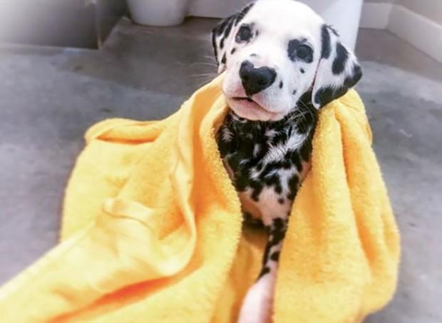 Chú chó đốm trở thành ngôi sao Instagram nhờ chiếc mũi hình trái tim độc nhất vô nhị - Ảnh 2.