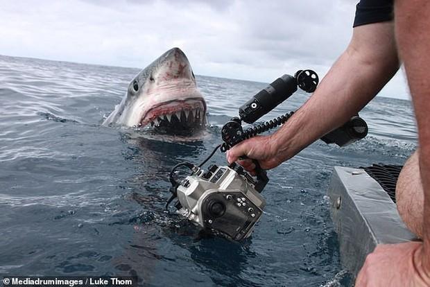 Thợ lặn bất chấp nguy hiểm chụp cận cảnh hàm cá mập ở khoảng cách vài chục centimet - Ảnh 1.