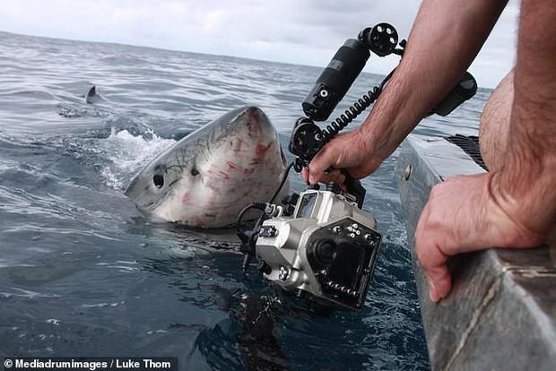 Thợ lặn bất chấp nguy hiểm chụp cận cảnh hàm cá mập ở khoảng cách vài chục centimet - Ảnh 2.