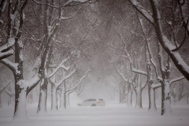 Chú chó bị chủ bỏ mặc ngoài trời rét -22 độ C trong những ngày lạnh kinh hoàng tại Mỹ - Ảnh 2.