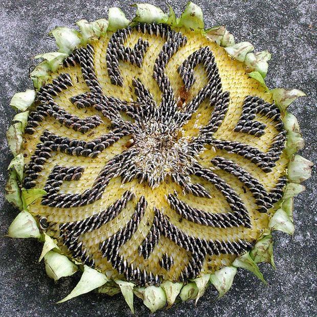 Những cô nàng rảnh nhất MXH: Đem mì tôm đan khăn, bóc thanh long bỏ hạt, xếp vỏ hạt bí thành hoa - Ảnh 20.