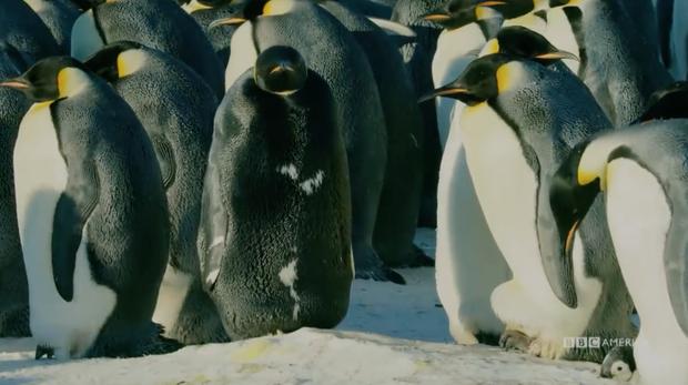 Đây có thể là con chim cánh cụt hiếm nhất thế giới: cả hành tinh có đúng 1 con - Ảnh 2.
