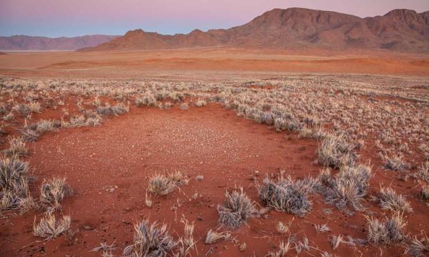 Những vòng tròn thần tiên đầy bí ẩn giữa sa mạc khiến khoa học đau đầu chuẩn bị có một lời giải mới - Ảnh 3.
