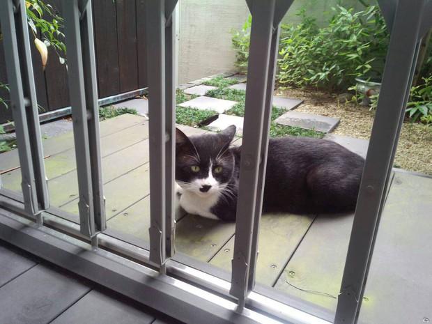 Câu chuyện xúc động về chú mèo đưa thư đang lấy đi nước mắt của dân mạng Nhật - Ảnh 1.