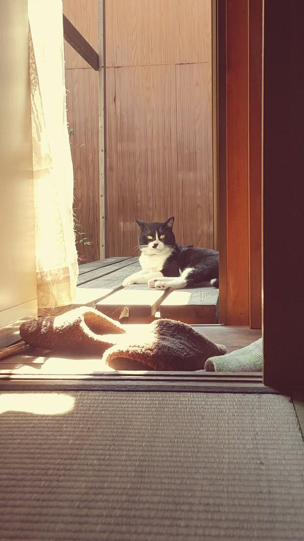 Câu chuyện xúc động về chú mèo đưa thư đang lấy đi nước mắt của dân mạng Nhật - Ảnh 4.