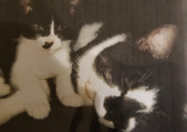Câu chuyện xúc động về chú mèo đưa thư đang lấy đi nước mắt của dân mạng Nhật - Ảnh 7.
