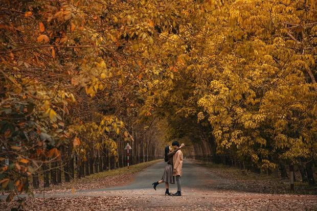 Cực hot: Hướng dẫn đường đi đến rừng cao su lá vàng đẹp như Hàn Quốc cách Sài Gòn chỉ 60km - Ảnh 1.