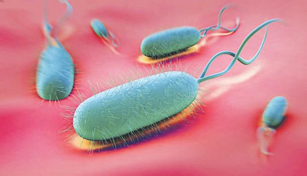 Ung thư dạ dày có thể âm thầm phát triển nếu dạ dày của bạn chứa nhiều loại vi khuẩn gây hại này - Ảnh 1.