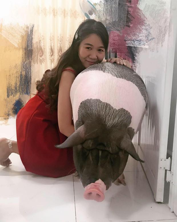Cô gái mua heo mini về nuôi làm thú cưng, ai ngờ 1 năm sau nó biến thành heo khổng lồ nặng hơn 1 tạ - Ảnh 6.