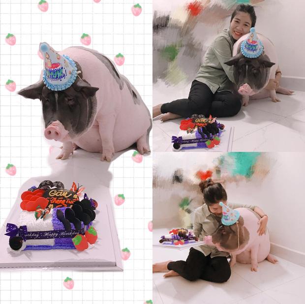 Cô gái mua heo mini về nuôi làm thú cưng, ai ngờ 1 năm sau nó biến thành heo khổng lồ nặng hơn 1 tạ - Ảnh 2.