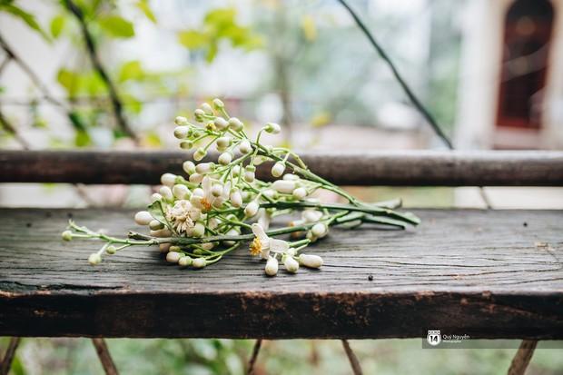 Người Hà Nội ăn uống thấy cưng, cứ tháng ba về là nhặt hoa ướp đủ thứ - Ảnh 1.