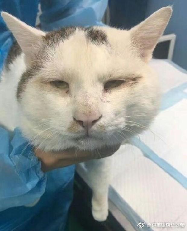 Chi 35 triệu đưa mèo đi cắt mí, cô chủ Trung Quốc khiến internet tranh cãi ác liệt - Ảnh 3.