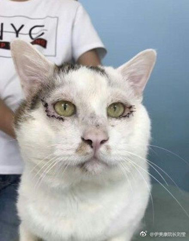 Chi 35 triệu đưa mèo đi cắt mí, cô chủ Trung Quốc khiến internet tranh cãi ác liệt - Ảnh 5.