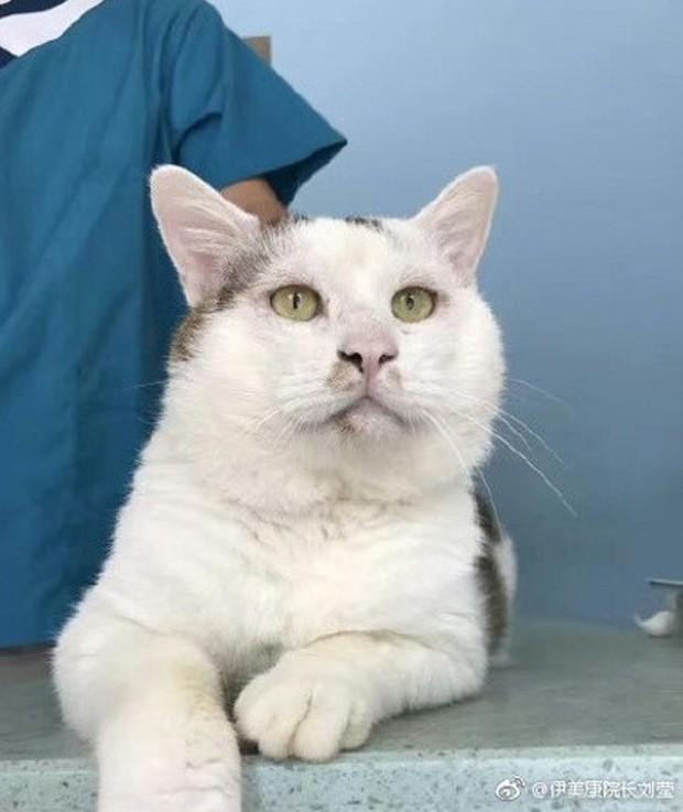 Chi 35 triệu đưa mèo đi cắt mí, cô chủ Trung Quốc khiến internet tranh cãi ác liệt - Ảnh 6.