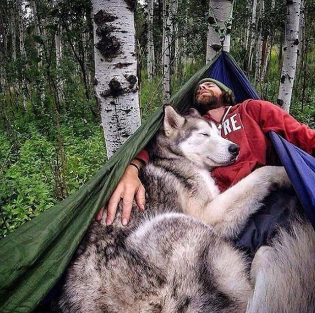 Chùm ảnh: 15 điều cần biết nếu bạn muốn nuôi một chú chó-lai-sói siêu đáng yêu trong nhà - Ảnh 16.
