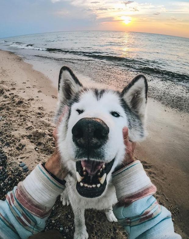 Chùm ảnh: 15 điều cần biết nếu bạn muốn nuôi một chú chó-lai-sói siêu đáng yêu trong nhà - Ảnh 24.