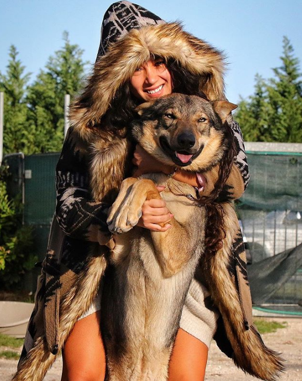 Chùm ảnh: 15 điều cần biết nếu bạn muốn nuôi một chú chó-lai-sói siêu đáng yêu trong nhà - Ảnh 4.