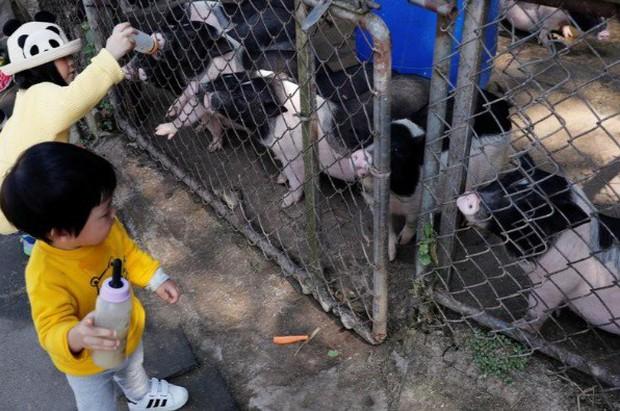 Năm Hợi, giới trẻ Đài Loan đua nhau nuôi lợn cảnh - Ảnh 4.