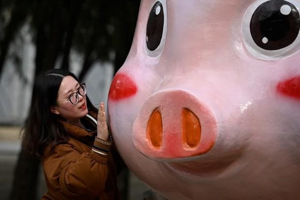 Linh vật lợn khắp thế giới vẫy chào năm Kỷ Hợi 2019: Vừa đáng yêu lại hài hước miễn chê - Ảnh 2.