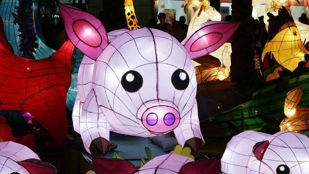 Linh vật lợn khắp thế giới vẫy chào năm Kỷ Hợi 2019: Vừa đáng yêu lại hài hước miễn chê - Ảnh 12.