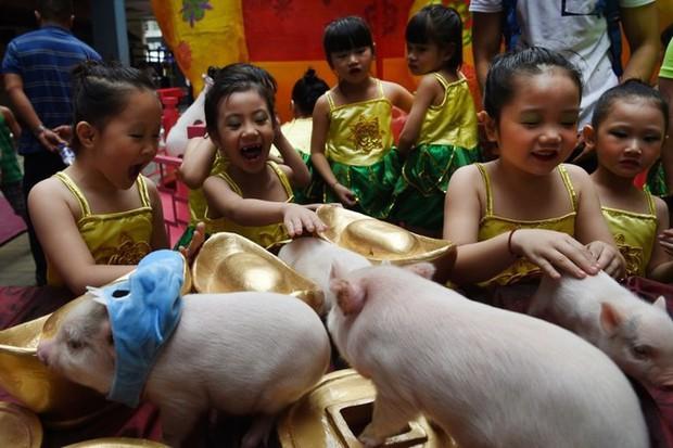 Linh vật lợn khắp thế giới vẫy chào năm Kỷ Hợi 2019: Vừa đáng yêu lại hài hước miễn chê - Ảnh 4.