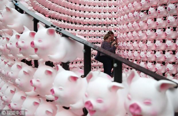 Linh vật lợn khắp thế giới vẫy chào năm Kỷ Hợi 2019: Vừa đáng yêu lại hài hước miễn chê - Ảnh 9.