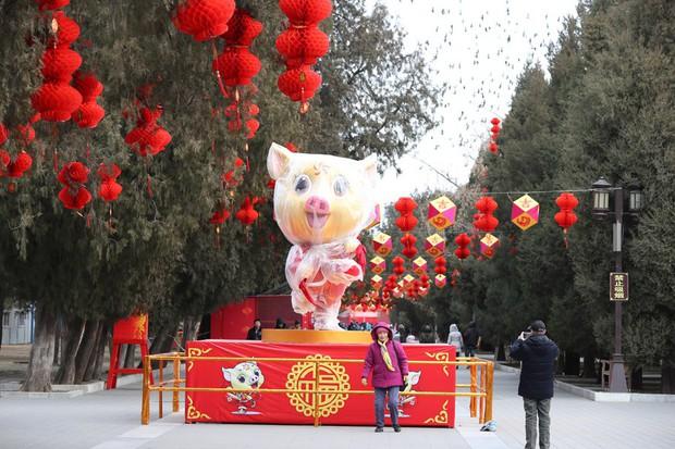 Linh vật lợn khắp thế giới vẫy chào năm Kỷ Hợi 2019: Vừa đáng yêu lại hài hước miễn chê - Ảnh 11.