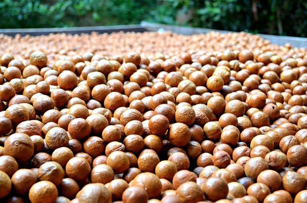 Sự thật về loại hạt nhiều gia đình bày trong khay mứt Tết: vì sao lại là đắt nhất thế giới - Ảnh 1.