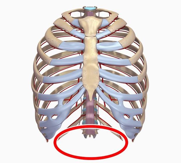 10 bộ phận cơ thể sẽ biến mất trong tương lai, cái số 4 ai nghe xong cũng mừng - Ảnh 8.