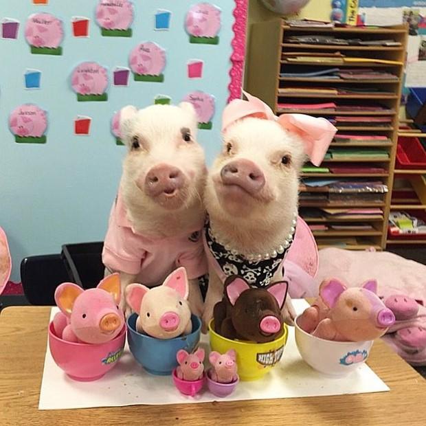 Năm con heo Kỷ Hợi, điểm mặt những chú lợn nổi tiếng, làm mưa làm gió trên mạng xã hội toàn thế giới - Ảnh 1.
