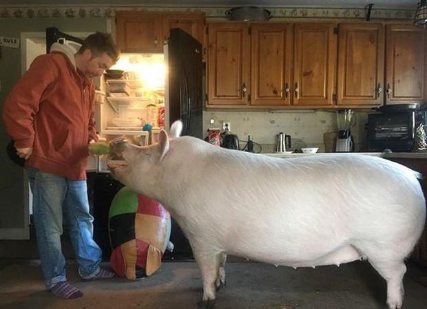 Năm con heo Kỷ Hợi, điểm mặt những chú lợn nổi tiếng, làm mưa làm gió trên mạng xã hội toàn thế giới - Ảnh 5.