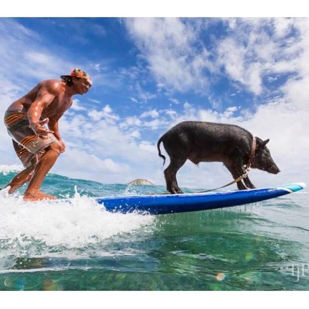 Năm con heo Kỷ Hợi, điểm mặt những chú lợn nổi tiếng, làm mưa làm gió trên mạng xã hội toàn thế giới - Ảnh 7.