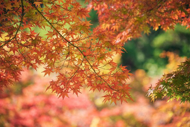 Muốn một lần ghé thăm Nhật Bản nhưng lại sợ đông đúc, ồn ào? Miyagi chính là câu trả lời dành cho bạn! - Ảnh 11.