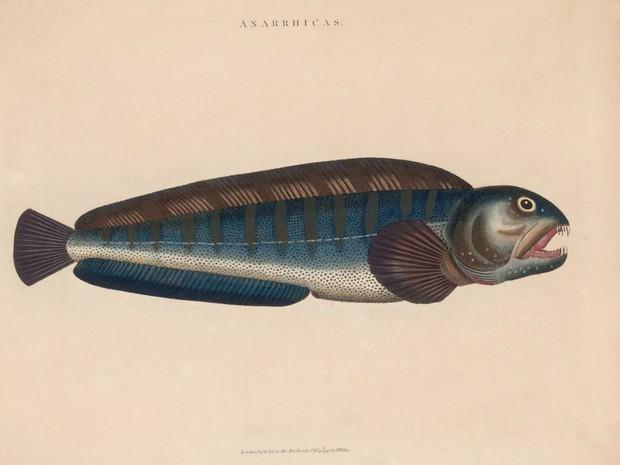 Con người đã vô tình đẩy loài cá xấu thảm thương này vào cảnh tuyệt chủng và đây là câu chuyện đằng sau - Ảnh 3.