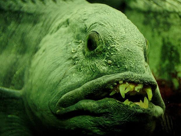 Con người đã vô tình đẩy loài cá xấu thảm thương này vào cảnh tuyệt chủng và đây là câu chuyện đằng sau - Ảnh 1.