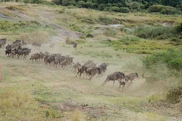Choáng với hành trình 10 ngày rong ruổi Kenya - châu Phi với toàn những trải nghiệm có 1-0-2: Ai mê khám phá nhất định không được bỏ qua! - Ảnh 14.