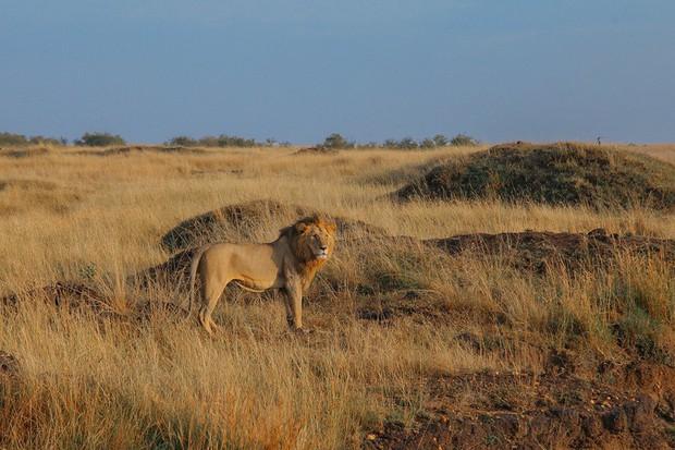 Choáng với hành trình 10 ngày rong ruổi Kenya - châu Phi với toàn những trải nghiệm có 1-0-2: Ai mê khám phá nhất định không được bỏ qua! - Ảnh 24.